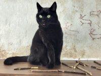 Gato-Mordedores zoom