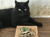 Gato-Snacks