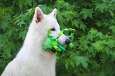 Perro-Juguetes