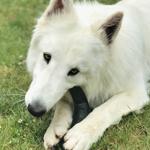 Perro-Mordedores Naturales6