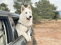 Perro-Viaje