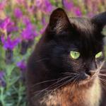 gato antiparasitario (1) copia